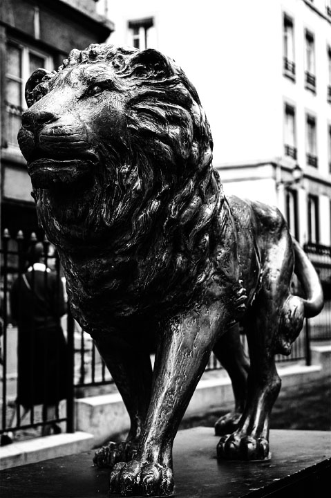 A lion in Lyon