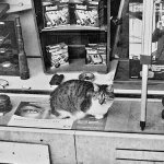 Cat in the shop